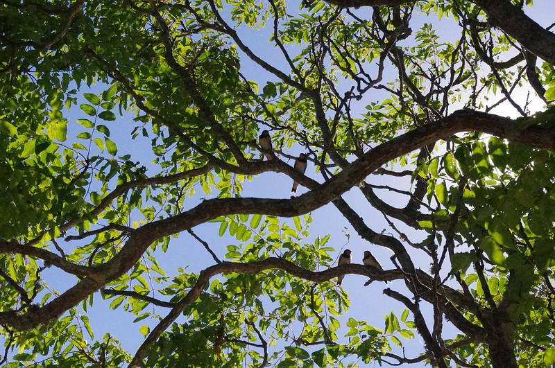 Sous le soleil, La Fraiche dans les arbres