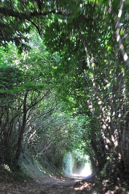 Chemin arboré