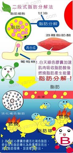 脂肪分解過程脂肪燃燒體脂肪消耗熱量亞尼活力纖幫助燃燒體脂肪 | www.yanni8.com 體脂肪百分比 (body … | Flickr