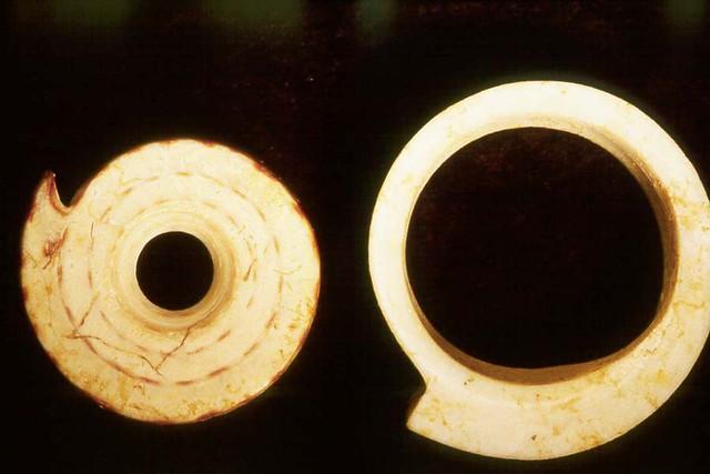 Conus Shell Beads