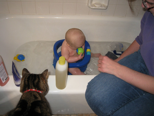 Sassy is supervising bath time