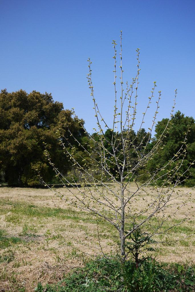 一棵開過花的樹?   看到它時, 我想到了席慕容的 一棵開花的樹 一棵開花的樹 (席慕容) 如何讓你 遇見我 在我 ...