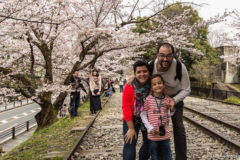 Japonismo disfrutando de los cerezos en Kioto