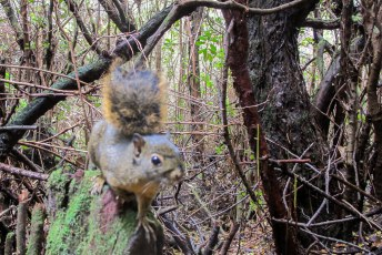 Enorm nieuwsgierige eekhoorntjes in het natuurpark op de vulkaan.