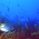 Reeffish vol1.01 (59)