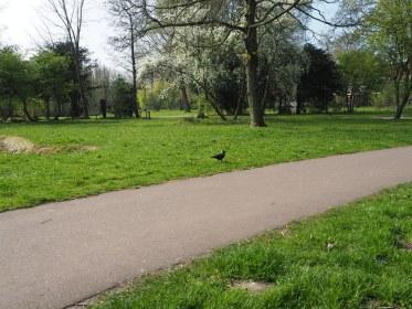 Noorder Park - Amsterdam  (2)