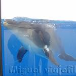 Oceanografic Miguel, focas 05