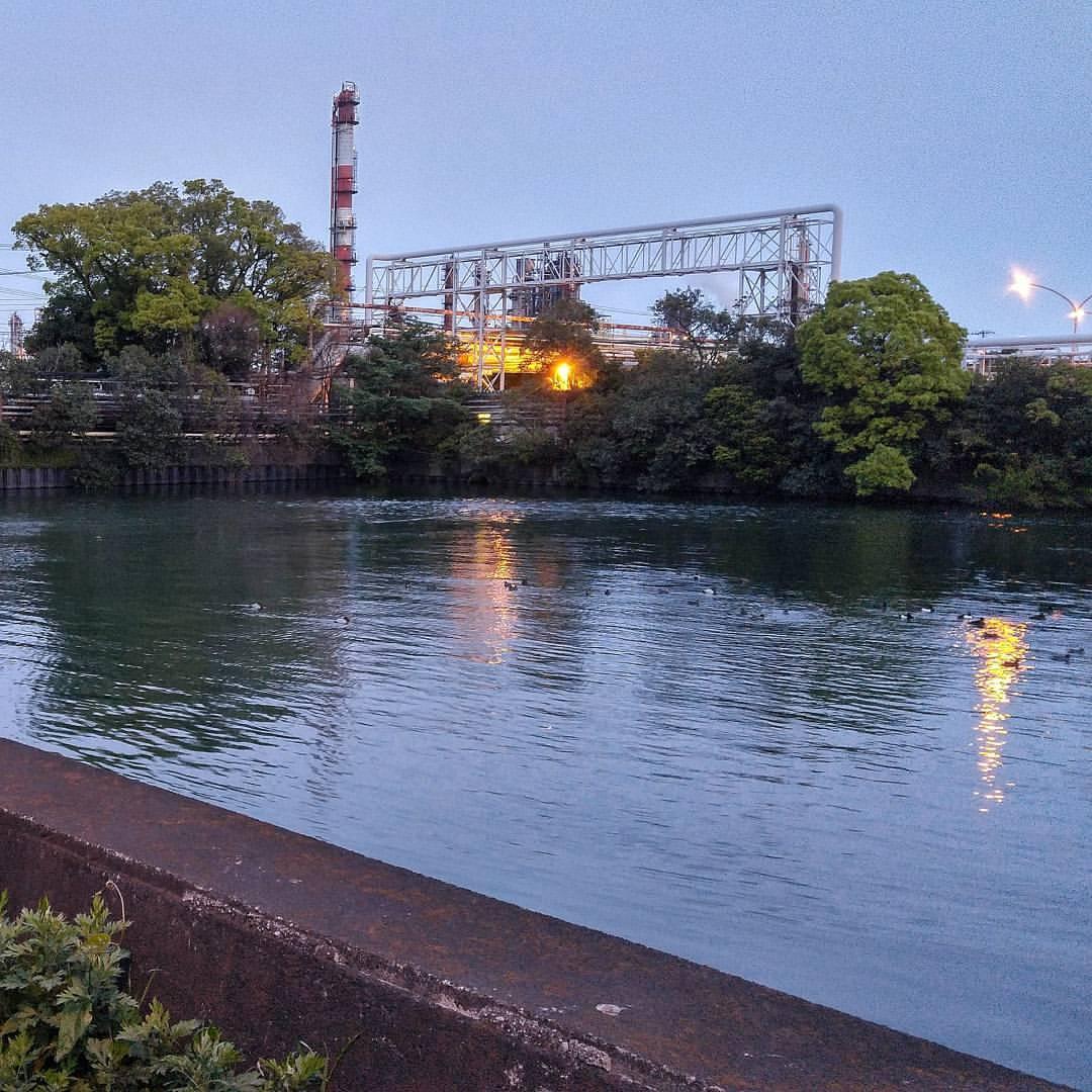 #ducks at #sundown in #kawasaki