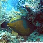 Reeffish vol1.01 (22)