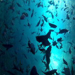 Viajefilos en el Leon Dormido, Galapagos 001