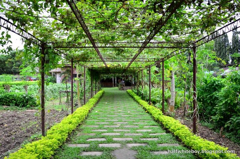 halfwhiteboy - the farmhouse in aloguinsan cebu 03