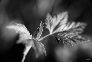 shoots & leaves