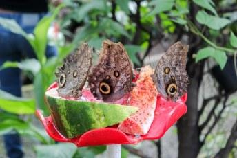 Volgende programmapunt de vlindertuin in Medellin.