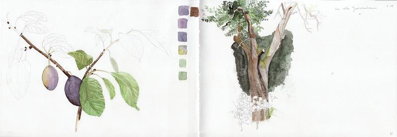 alter zwetschgenbaum