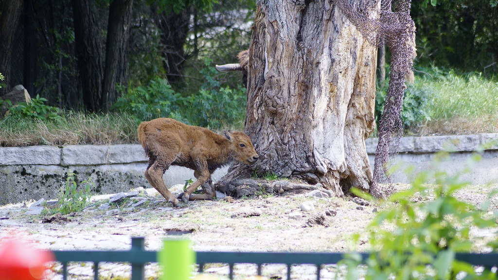 Zoo Trip   A family trip to Sofia Zoo on July 6th 2014   Galia Gerginekova   Flickr