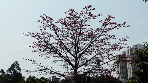 140323Sun粉嶺區 (66)   lonch20   Flickr