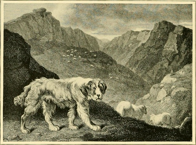 """Image from page 145 of """"The new book of the dog : a comprehensive natural history of British dogs and their foreign relatives, with chapters on law, breeding, kennel management, and veterinary treatment"""" (1911)"""