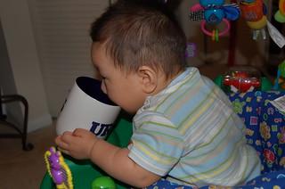 舔咖啡杯   大橡總是認為別人吃的東西要比自己的好,這天早晨他看到橡爸喝咖啡,饞得連口水都流下來了 ...