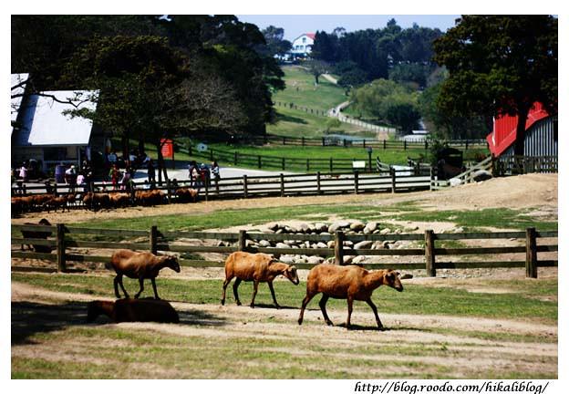 飛牛牧場 | Hikali | Flickr