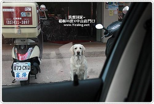[送養/找主人] 楊梅中山店85度C 拉不拉多   [送養/找主人] 楊梅中山店85度C 拉不拉多 所在地 : 桃園楊梅…   Flickr