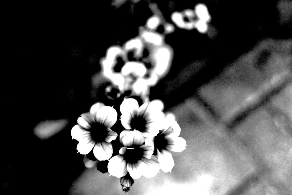 gothic flowers modified version