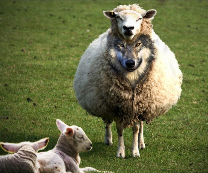 Wolf In Sheeps Clothing Jay Free Flickr