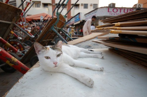 Resting in Deira souk