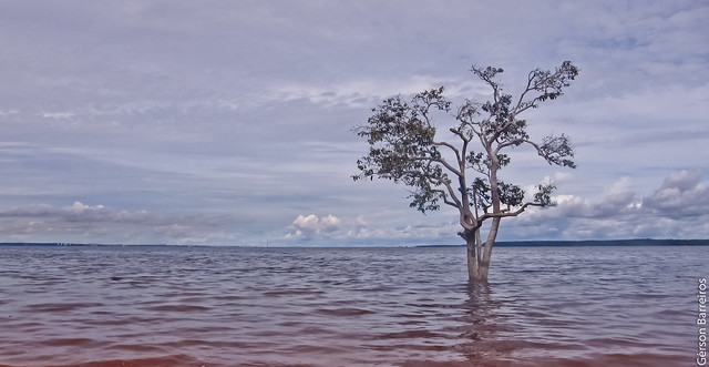 Tree on the water!