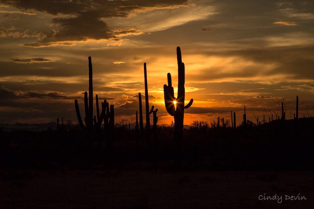 Gorgeous Evening Sunset In The Sonoran Desert Tucson Ari