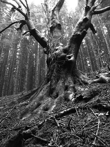Scary Tree This Picture May Be Purchased At Www