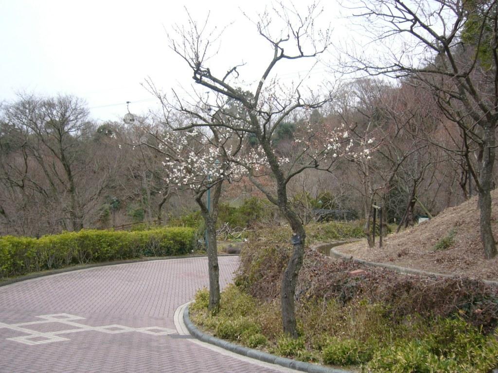 Nunobiki Herb Park: Garden | 布引香草園:路旁的白梅,還散發著淡淡的花香 Kobe, Jap… | Flickr
