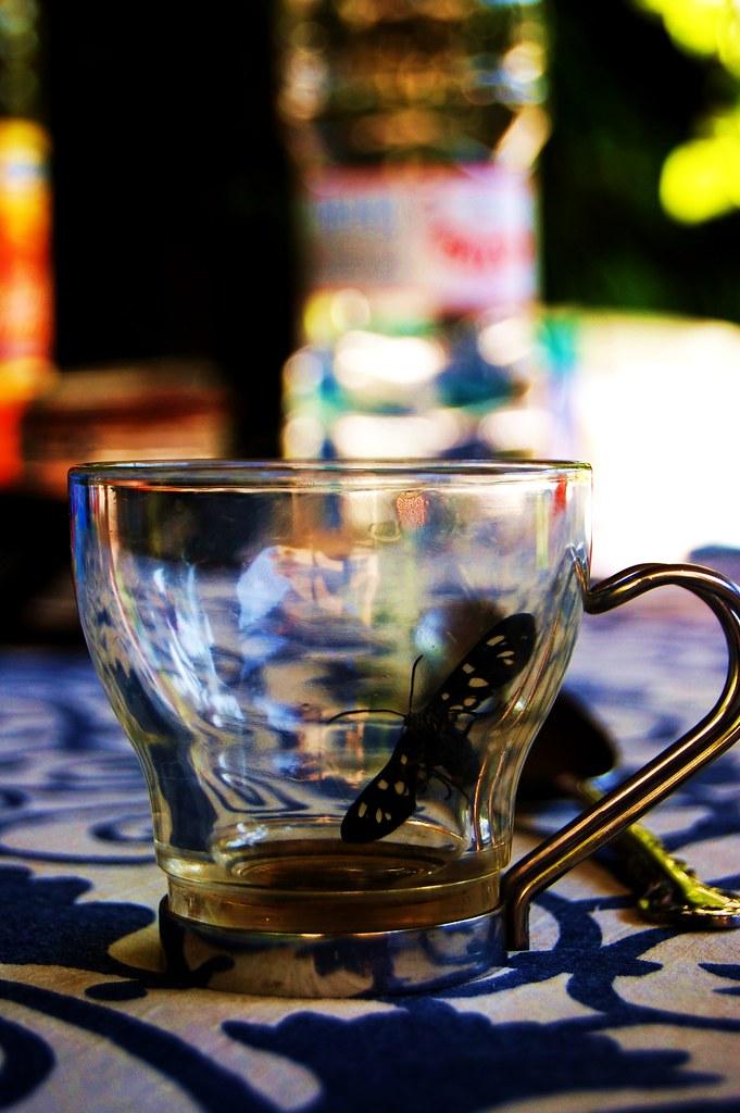 Farfalle and Kaffee   HelenHates Peas   Flickr