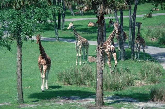 Animal Kingdom Lodge