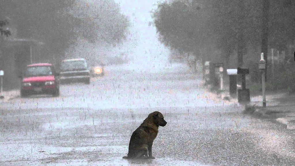 Sad Lonely Crying Girl Hd Wallpapers Lonely Dog In Rain A Heartbreaking Photo Goodbye