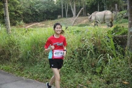 Safari Zoo Run 2014