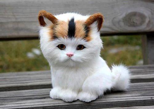 cute cat cute cats