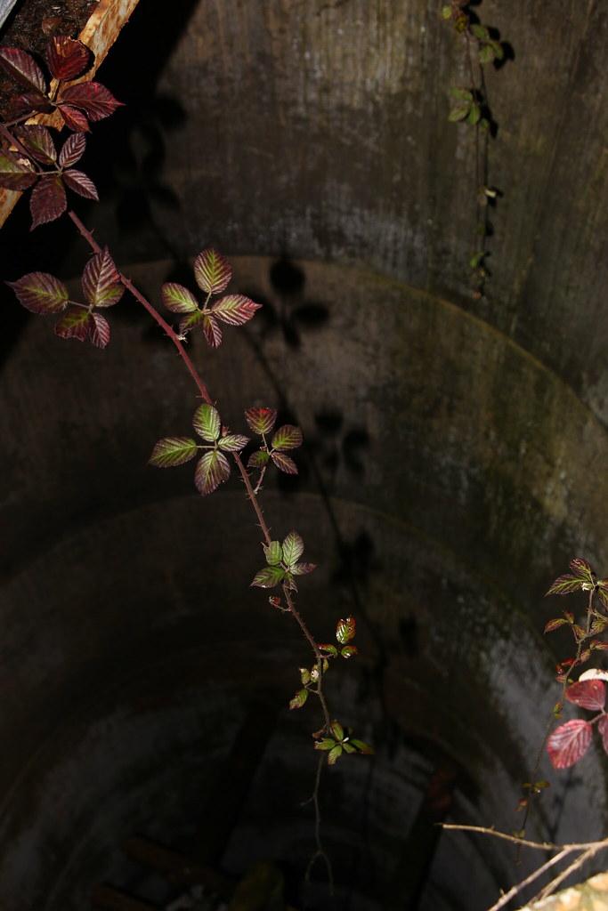 Au Fond D Un Puits : puits, Victoria, Abreu, Flickr