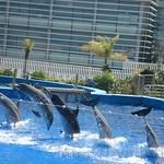 Oceanografic Miguel, delfines 04