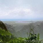 10 Viajefilos en Australia, Cape Tribulation 004