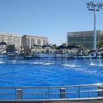 Oceanografic Miguel, delfines 05