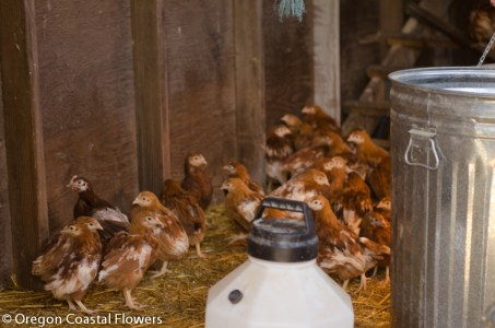 Pasture Raised Poultry