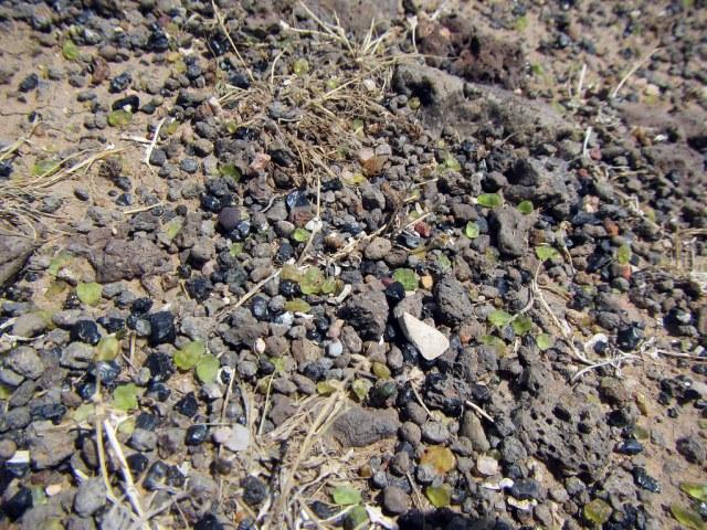Peridot Mesa Close Up