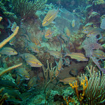 Reeffish vol1.01 (40)
