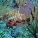 Reeffish vol1.01 (45)