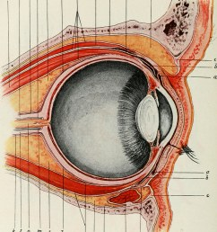 image from page 416 of the american encyclopedia and dictionary of ophthalmology edited by casey [ 886 x 1024 Pixel ]