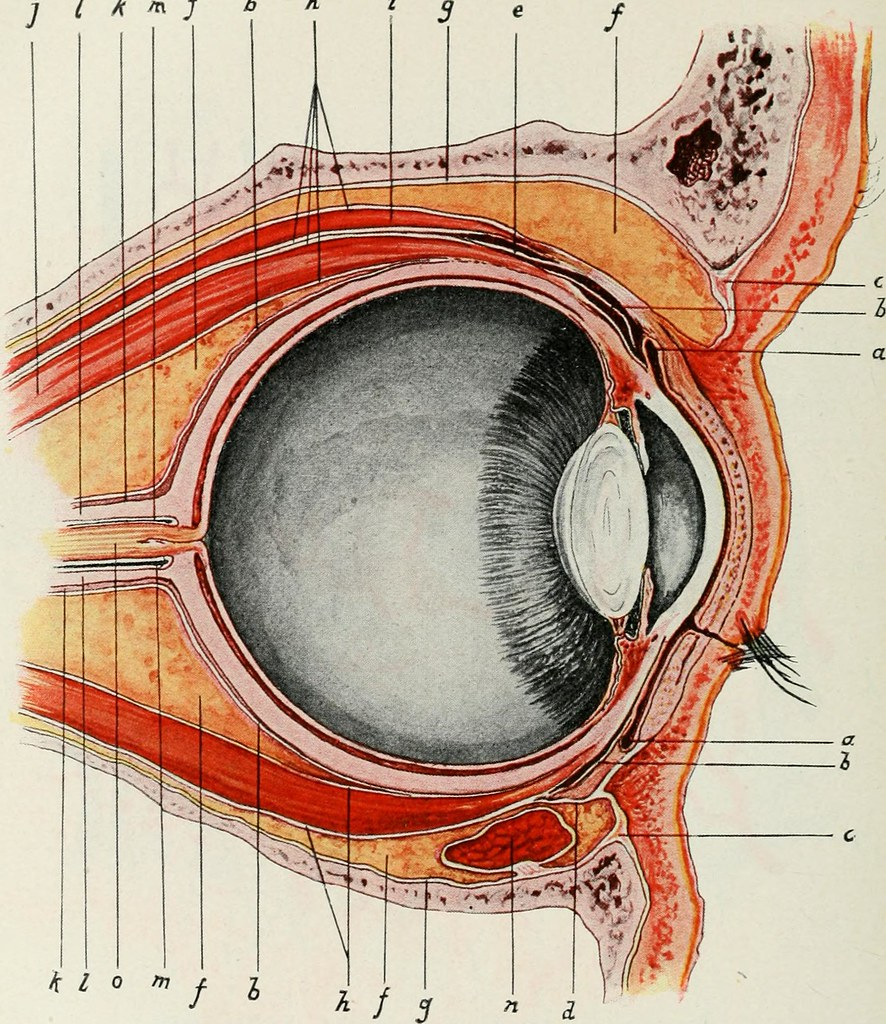 medium resolution of  image from page 416 of the american encyclopedia and dictionary of ophthalmology edited by casey