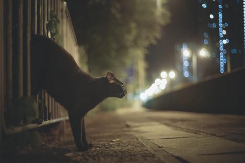 凌晨 | Tridentz | Flickr