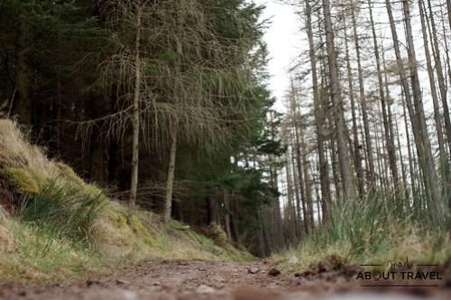 Cardrona-forest-polonez-01