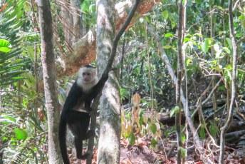 En aapjes natuurlijk.