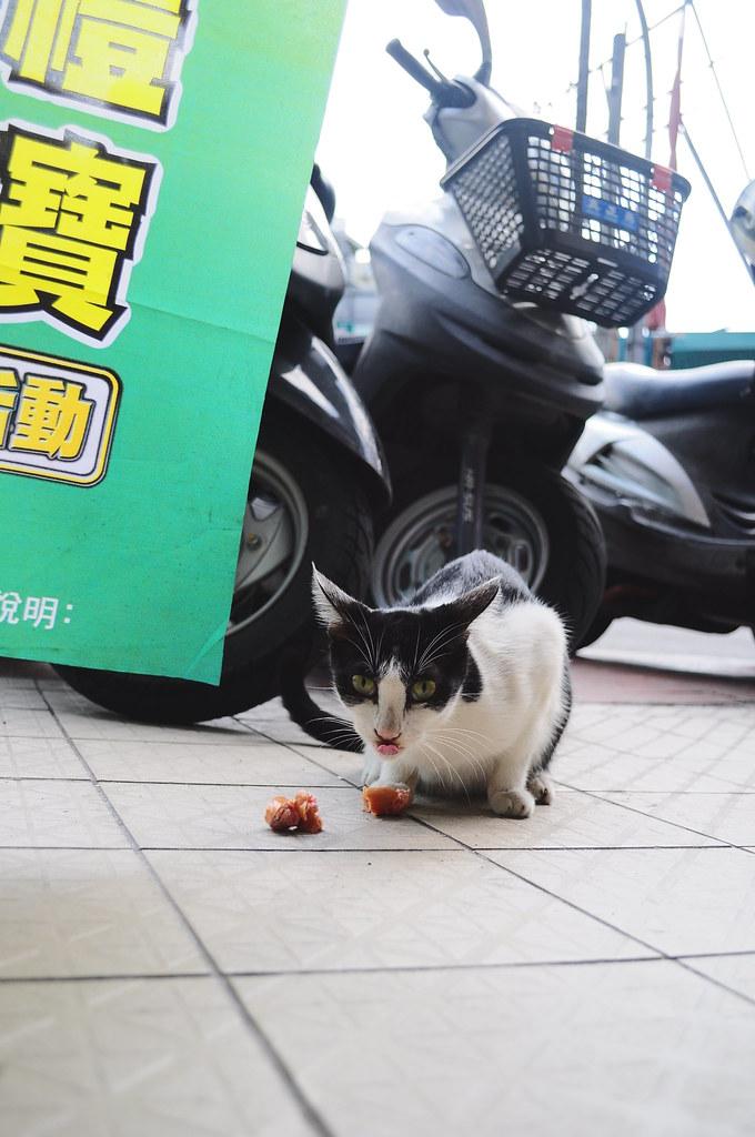 101011 26元的Model   在某家7-11遇到的,去買了一根火腿餵他吃,然後就拍了好幾張照片阿   大發 林   Flickr